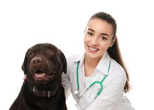 Veterinarian doc with dog. On white background stock images