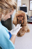 Veterinarian Doctor Royalty Free Stock Photography