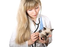 Veterinarian doctor Stock Photos