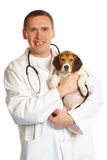 Veterinarian doctor and a beagle puppy Royalty Free Stock Photos