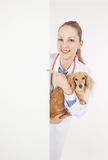 Veterinarian doctor with dog. With empty board royalty free stock photo