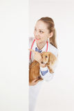 Veterinarian doctor with dog. With empty board stock photography
