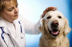 Veterinarian doctor with dog Stock Photos