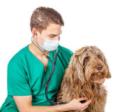 Veterinarian doctor Royalty Free Stock Images