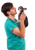 Veterinarian doctor holding a  chihuahua dog. Against white background Royalty Free Stock Image