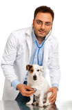 Veterinarian doctor with jack russell Stock Photography