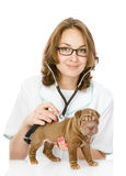 Veterinarian doctor making a checkup of a sharpei puppy dog. Stock Image