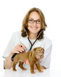 Veterinarian doctor making a checkup of a sharpei puppy dog. Stock Photos