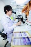 Veterinarian doctor working Stock Photos
