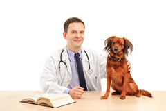 Veterinarian with a dog Royalty Free Stock Photo