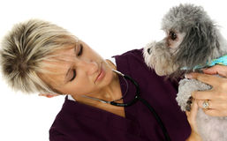 Veterinarian With Dog Stock Photos