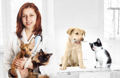 Veterinarian and dog and cat Stock Images