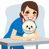 Veterinarian Dog Collar Royalty Free Stock Photography