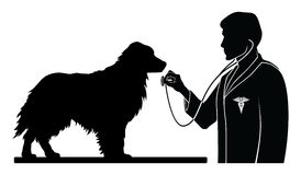 Veterinarian With Dog Royalty Free Stock Image