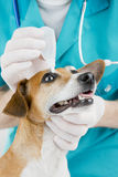Veterinarian and dog Royalty Free Stock Photography