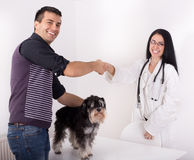 Veterinarian and dog owner. Young women veterinarian and dog's owner shaking hands. Miniature schnauzer standing on white table royalty free stock photography