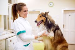 Veterinarian with dog at pet ambulance. Relaxing animal before treatment Stock Images
