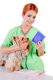 Veterinarian with dog Stock Photo