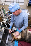 Veterinarian with dog pre-operation Royalty Free Stock Photo