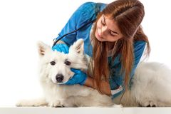 Veterinarian with dog, on table in vet clinic, animal doctor concept. Smiling Veterinarian with dog, on table in vet clinic, animal concept stock photo