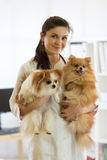 Veterinarian with dogs in hands in clinic Royalty Free Stock Photography