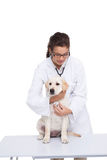 Veterinarian doing check up at a dog with a stethoscope Royalty Free Stock Photography