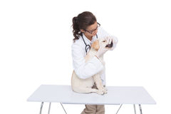 Veterinarian doing check up at a dog Royalty Free Stock Photo