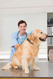 Veterinarian doing injection at a cute dog Royalty Free Stock Image
