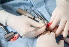Veterinarian doing knee surgery on small dog Stock Photo