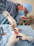Veterinarian doing knee surgery on small dog Stock Images