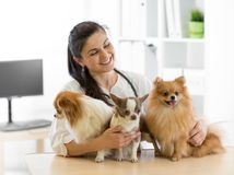 Veterinarian embraces three dogs in vet clinic royalty free stock images