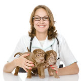 The veterinarian embraces two sharpei puppies dog Royalty Free Stock Photo