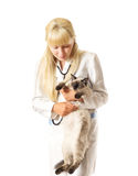 Veterinarian examines a cat Royalty Free Stock Images