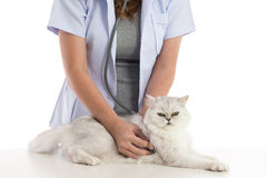 Veterinarian examines a cat Royalty Free Stock Photos