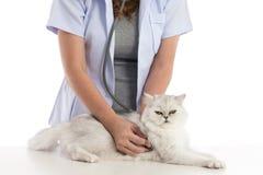 Veterinarian examines a cat Royalty Free Stock Photos