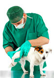 Veterinarian examines the dog's hip Stock Images