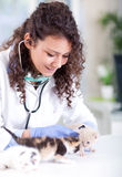 Veterinarian examines four beautiful little a kitten Stock Photo