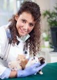 Veterinarian examines four beautiful little  kittens Stock Photos