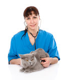 Veterinarian examining a cat. isolated on white background Stock Photos