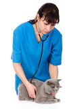 Veterinarian examining a cat. isolated on white background Stock Photo