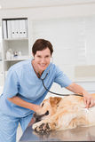 Veterinarian examining a cute dog Stock Photo