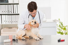 Veterinarian examining a cute dog Royalty Free Stock Images
