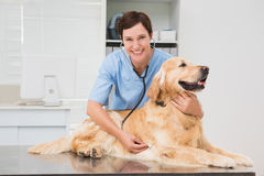 Veterinarian examining a cute dog with a stethoscope. In medical office royalty free stock photography