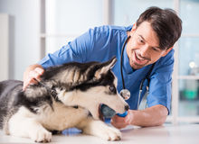 Veterinarian Royalty Free Stock Images