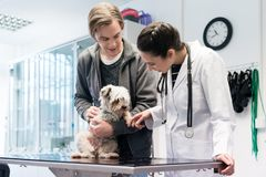 Veterinarian examining dog in hospital stock photos
