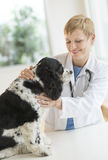 Veterinarian Examining Dog In Hospital Stock Images