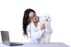 Veterinarian examining dog with stethoscope Stock Photos