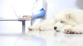 Veterinarian examining dog on table in vet clinic