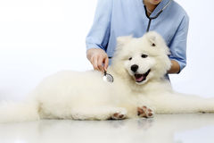 Veterinarian examining dog on table in vet clinic Stock Photography