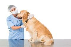 Veterinarian examining a dog Stock Image